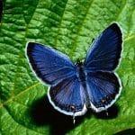 L'armonia delle forme in una splendida farfalla